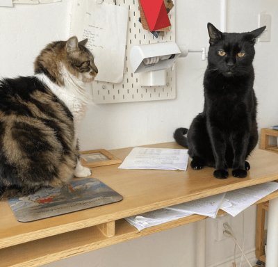 Two cats sit on a desk. The left cat is fluffy with black, brown and white fur. The cat on the right is black.