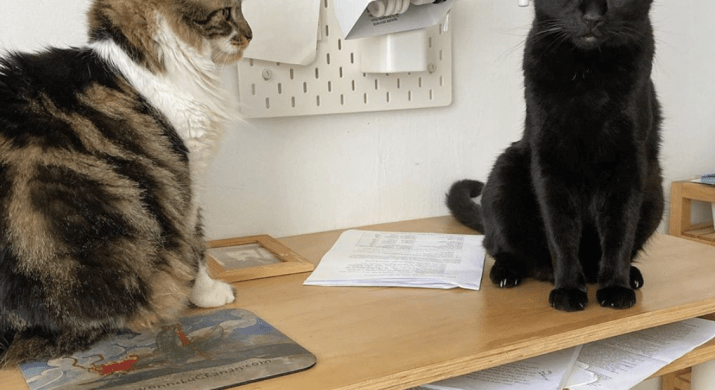 A black cat and a brown and white cat sit on a desk. The black cat is looking at the camera.