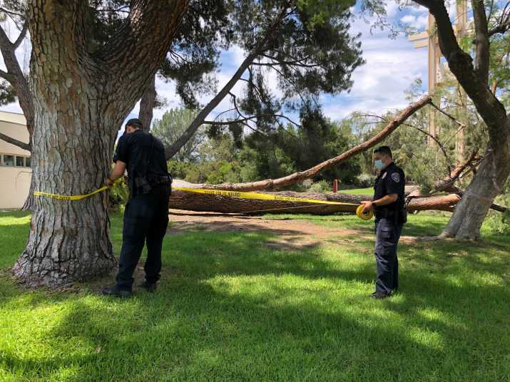 campus safety officers tape off the area around a fallen pine