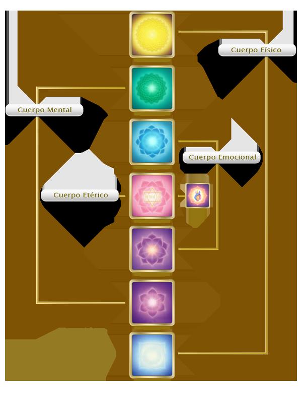 los cuatro cuerpos inferiores