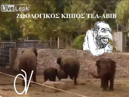 ΕΛΕΦΑΝΤΕΣ ΤΟΥ ΤΕΛ-ΑΒΙΒ