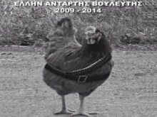 Να μαρμαρώσουμε μια κότα… Και να τη κάνουμε μνημείο τρανό, για κάθε «αντάρτη» εκατομμυριούχο βολευτή…