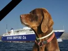 Φρικτός θάνατος 8 κυνηγόσκυλων στο καράβι της Σκύρου….