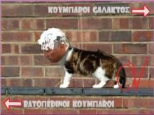 Ο Παν. Ψωμιάδης ψάχνει στέγη για τις Ευρωεκλογές….