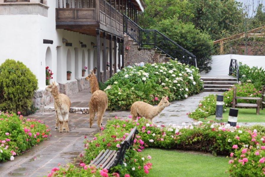 Tiroler Sommelierverein: Peru 2016