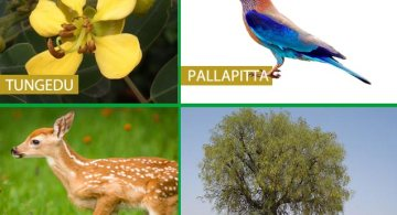 Telangana State Animal , Bird , Tree and Flower