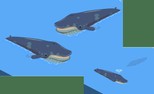 Whale-1-800x492