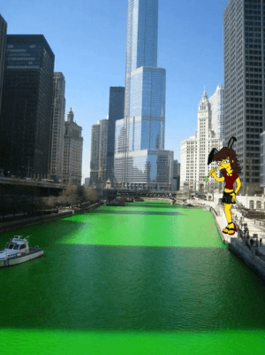 greenbunnywater