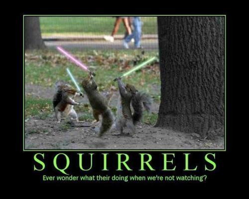 Lightsaber Squirrel Motivation