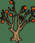 Special Orange Tree
