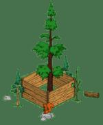 redwoodlevel3