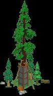 redwoodlevel5