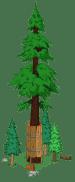 redwoodlevel6