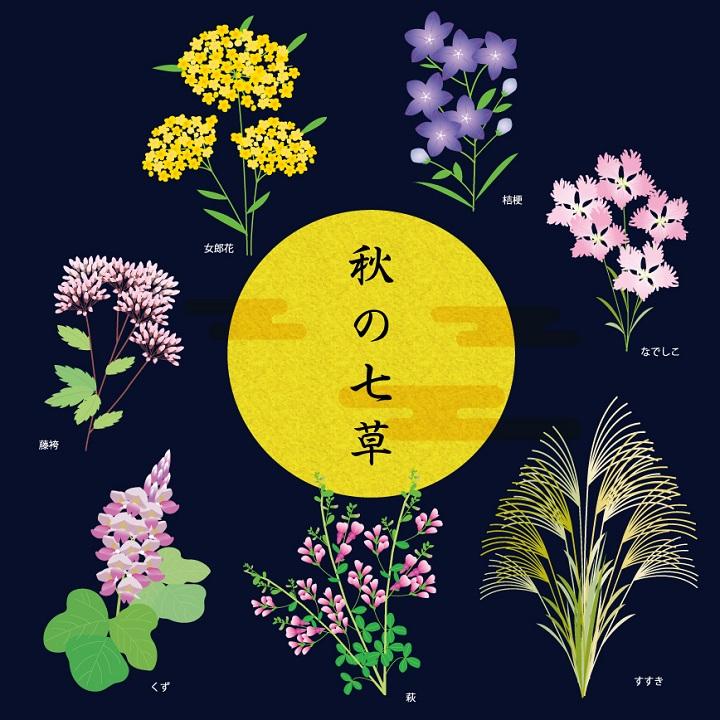 秋の七草 イラスト