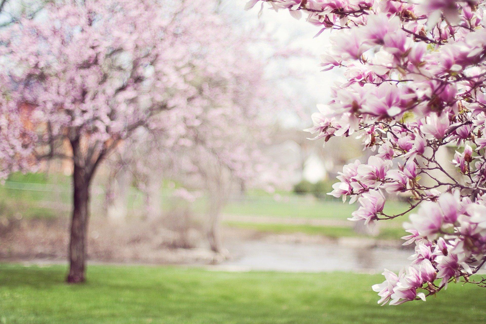 春 入学 桜 新春 新鮮