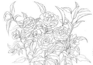 花のスケッチ 山茶花 大人の塗絵: 塗り絵で癒し 風景画 花の絵
