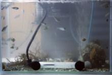 小さな動物園-水槽