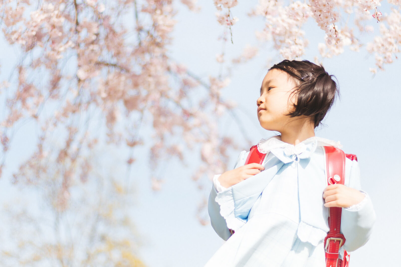 ランドセルと桜