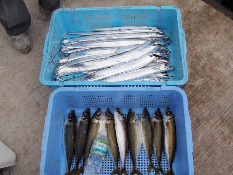 9月5日(土)の釣果(タチウオ・マルアジ)