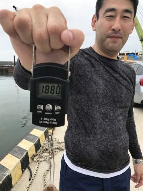 2018-7-12 1.88kgマダコ
