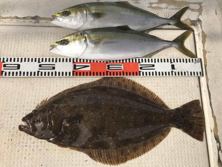 11月26日(月)の釣果(ヒラメ1匹・ハマチ2匹)