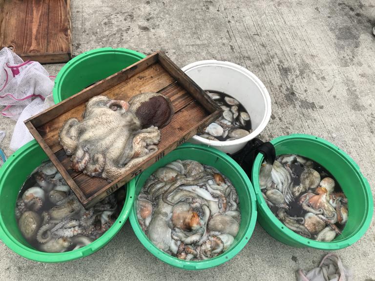7月8日(月)の釣果(マダコ3.2kg含む107杯)