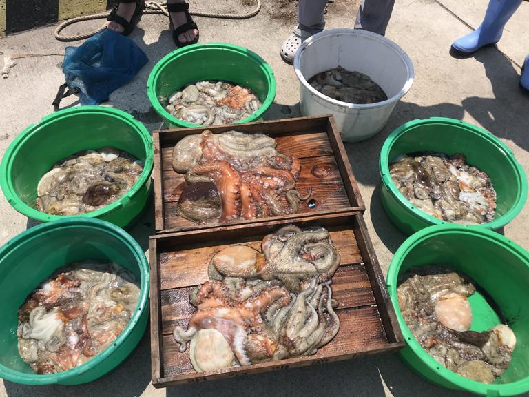 8月1日(木)の釣果(マダコ1.6kg含む船中59杯)
