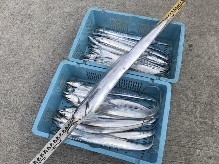 10月20日(日)の釣果(タチウオ)