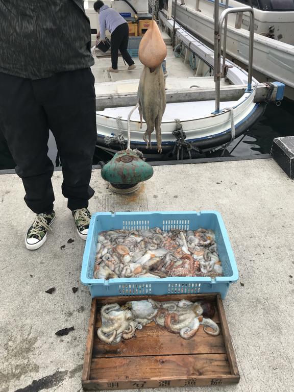 4月19日(日)の釣果(マダコ1.4kg含む船中42杯)