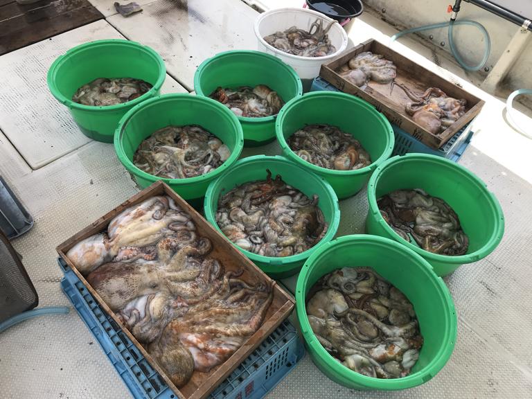5月25日(月)の釣果(マダコ2.0kg含む船中151杯)