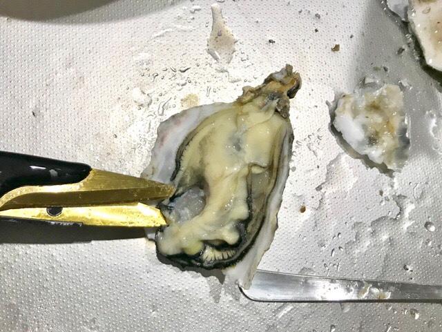 カキの貝柱をハサミで切っているところ