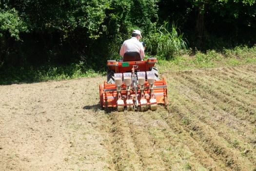 トラクターで播種