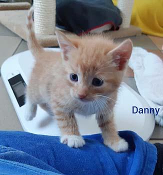 danny20-text