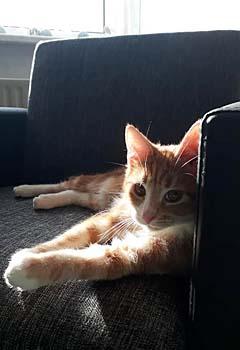 tiger-nov18-sofa