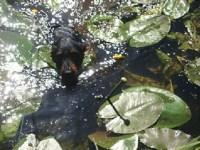 ebs-p-datzeschwimmen