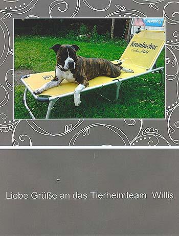 willis-z