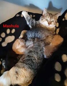 mashula-mai20-mit-jungen