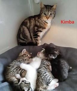kimba20-kasimir-kimmy-kasper-kev