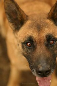 Hunde Übersicht