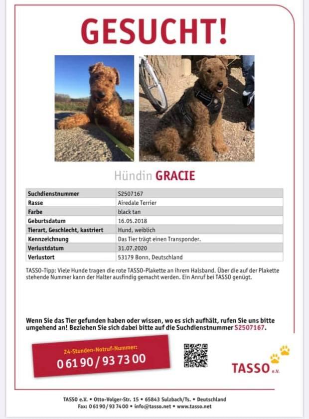 Airedale Hündin GRACIE und gelber Labrador in 53179 Bonn vermisst!