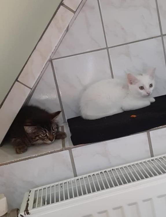 """3 """"T-Kitten"""""""
