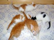 5 Katzenbabys (Waisenkinder)