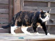 Frechdachs Katze Gina