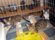 Unsere Katzenkinderstube