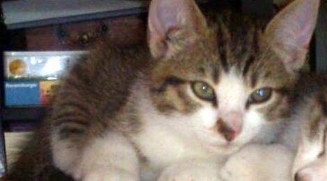 Katze Poppi wird vermißt in Guderhandviertel