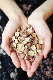 Dried lotus seeds - Lian Zi