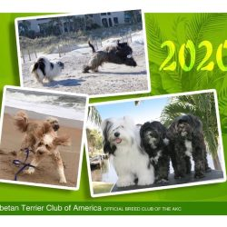calendar cover showing dog photos