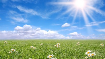 sunny-day-01