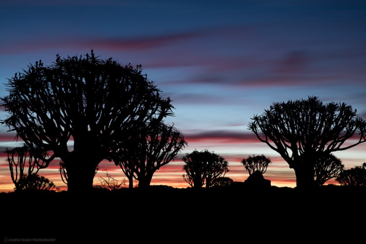 Dusk at Quiver Tree Forest