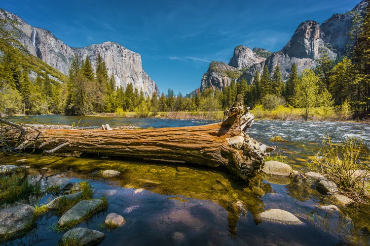 California Yosemite Merced River Fallen Tree